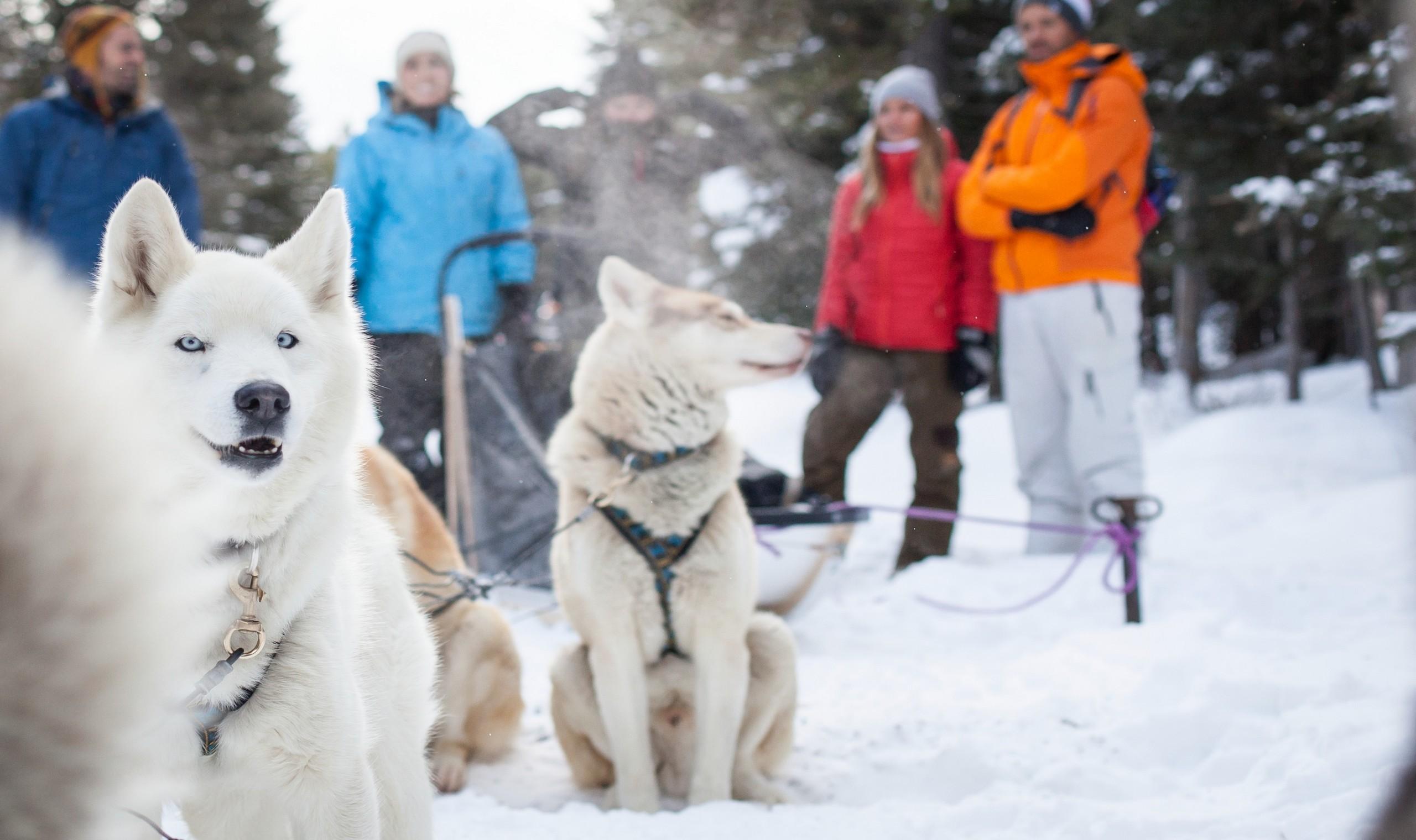 Dog Walking Requirements Calgary