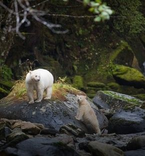 wonders of the spirit bear holiday