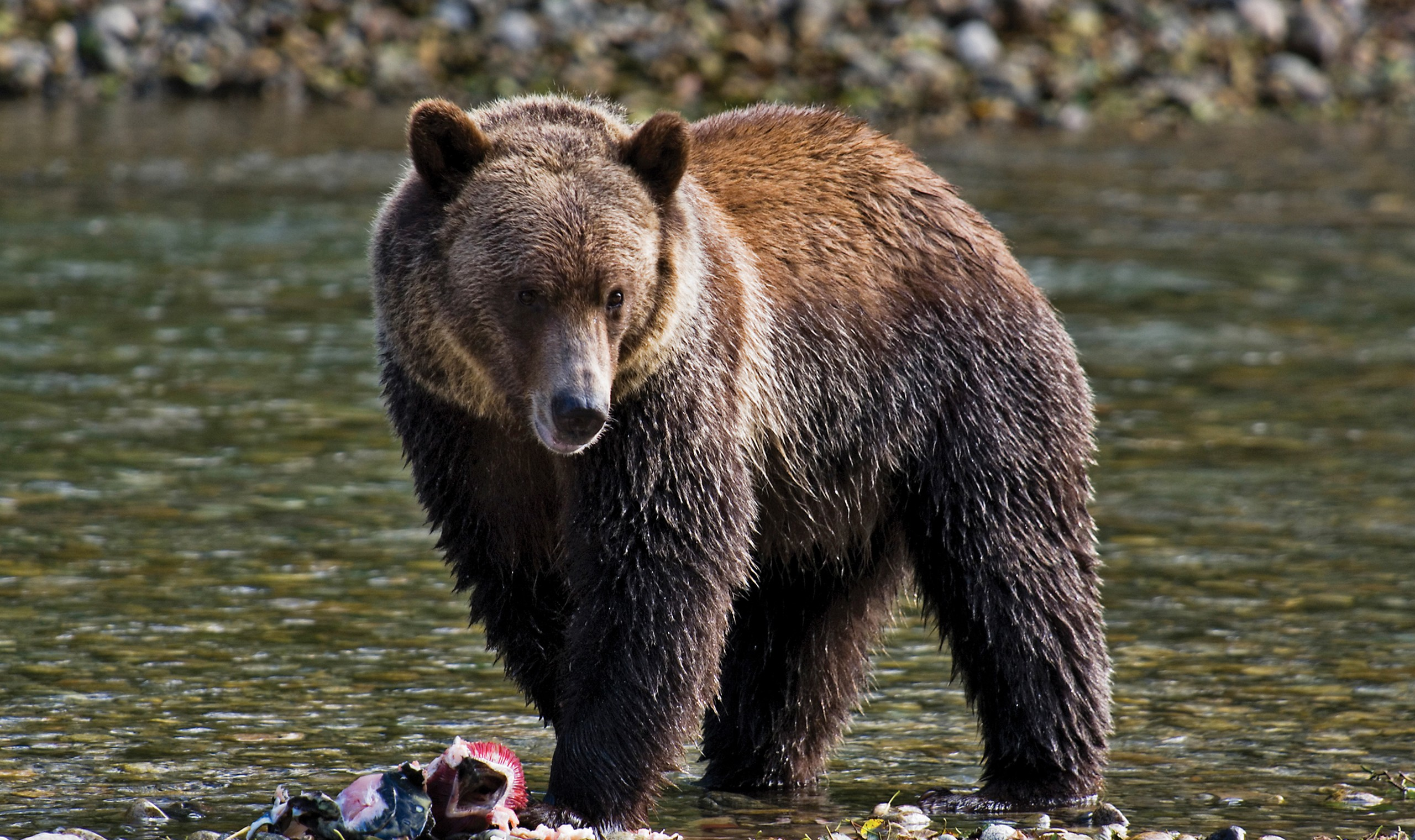 Buying Car From Canada >> Whales, Bears & Vancouver Island Fly Drive Holiday ...