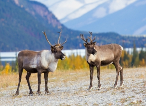canadian wildlife holidays