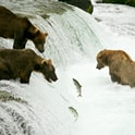 guide to bear watching
