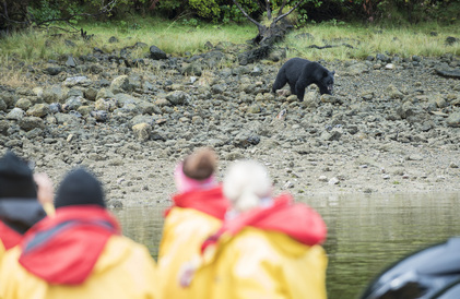 bear watching off Vancouver island