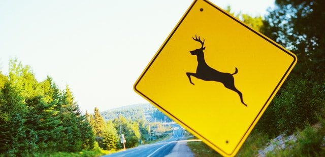 Watch out for wildlife