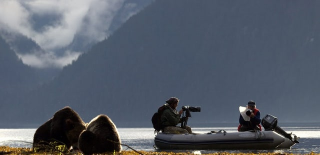 Bear watching from zodiac boat