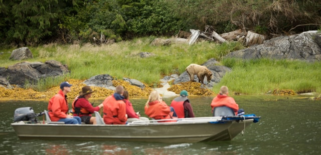 when to see bears in canada