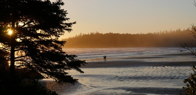Temperate rainforests, beaches & wildlife