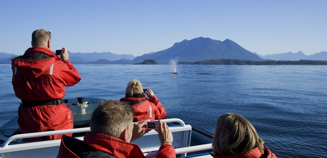 Whale watching off Vancouver Island