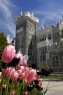 <br/>Toronto Castle and tulips