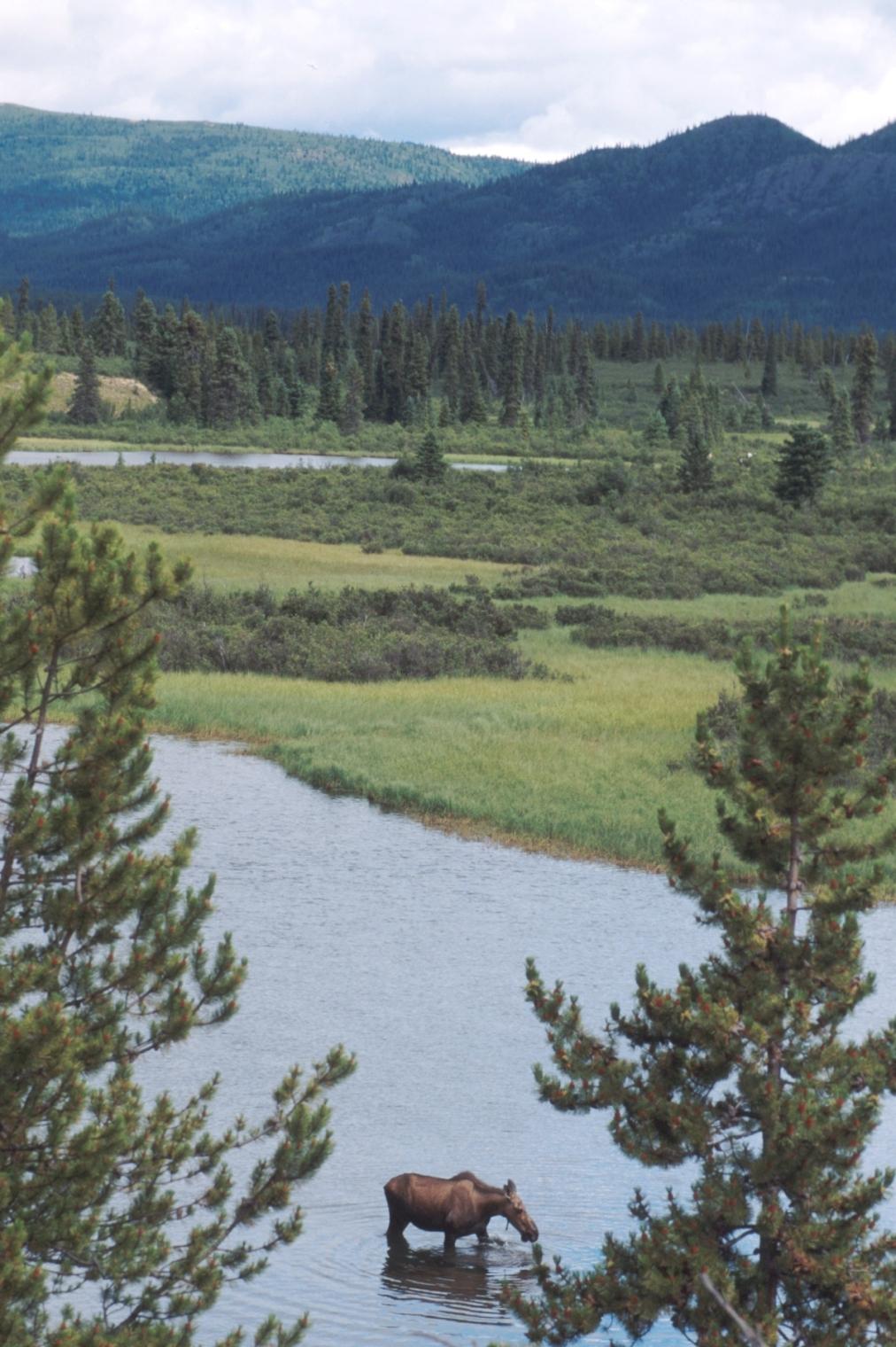 Yukon Holidays Amp Tours Canada Canadianaffair Com